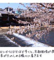京都店 周辺情報(春の鴨川と桜)